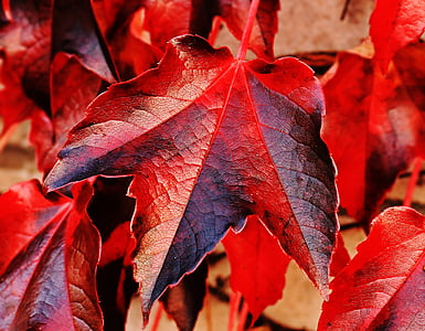 red and gray leaves