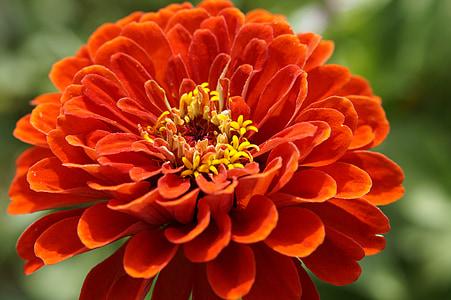 red petaled flower during daytime