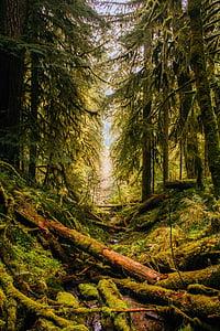 photo of rainforest