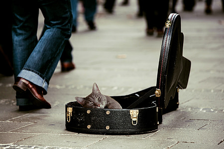 gray cat in black leather guitar case