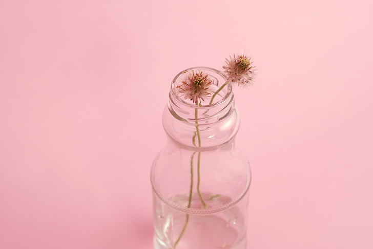 macro photography of clear glass jar with two brown dandelion flower