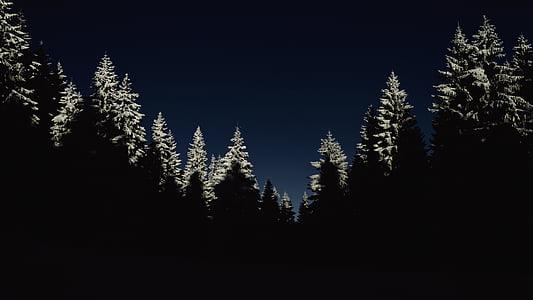 pine tree silhouette photo