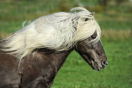 black horse with white hair