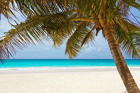 teal water beach near white sand
