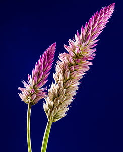 closeup photo of purple flower