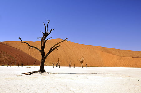 landscape photography of withered tree in middle of desert during winter