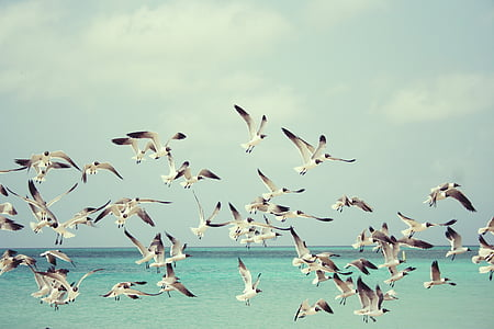 flock of white birds flying during daytime