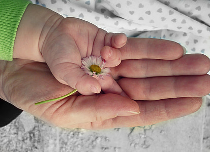 person laying hand on baby hand holding white flower