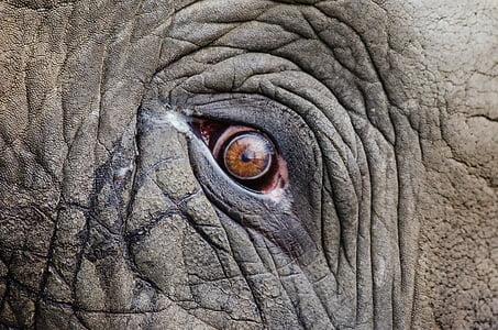 close-up photo of elephant eye