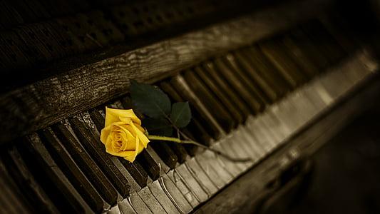 yellow rose on gray upright piano