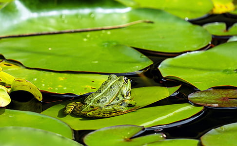 green frog on green water lily pad at daytime