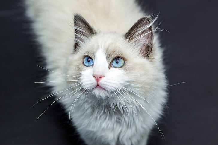 shallow focus photography of white and tan cat