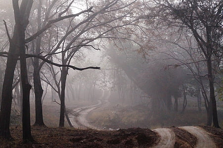 dirt road surrounded by trees