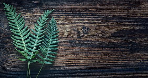 green Boston fern plant
