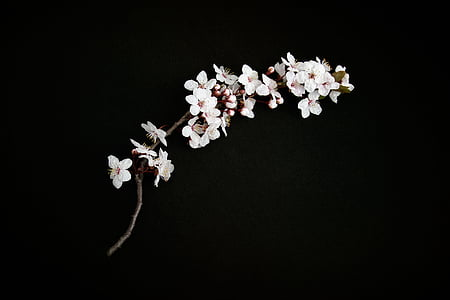 white flowers with black background