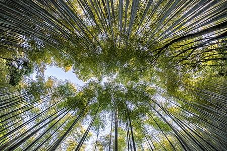 birds eye view of green trees