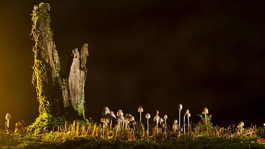 macro photo of brown mushrooms