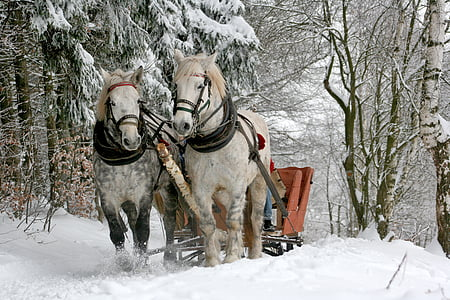 two white horses with slid