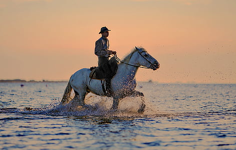 man riding on horse on body of water