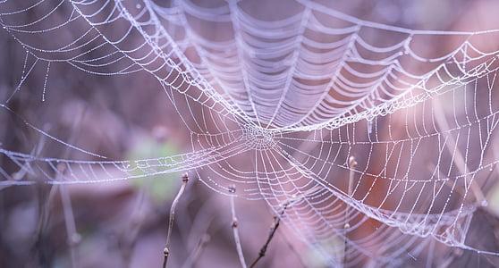 spiderweb on twigs closeup photography