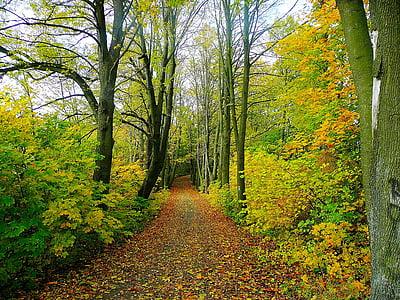 photo of road between tree