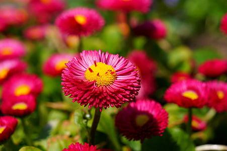bokeh shot of purple flowewr