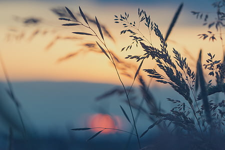 grass in front of sunset