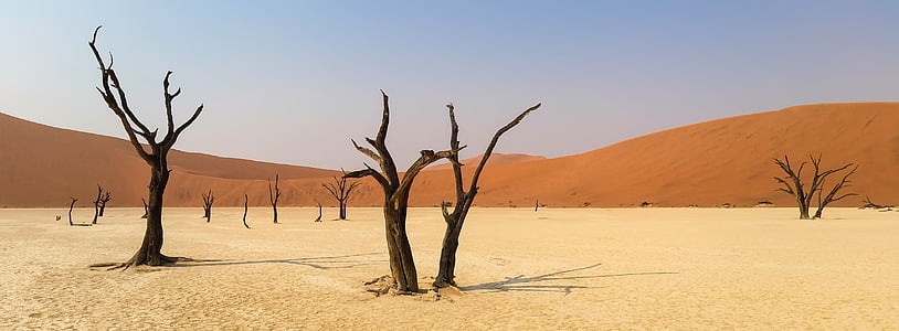 brown tree on desert