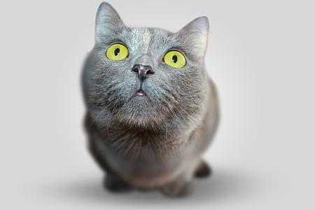 macro photography of medium-coated gray cat