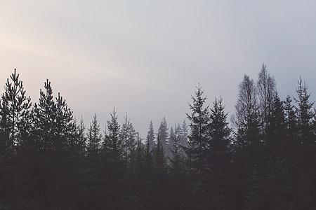 green leaf trees under cloudy skies photo