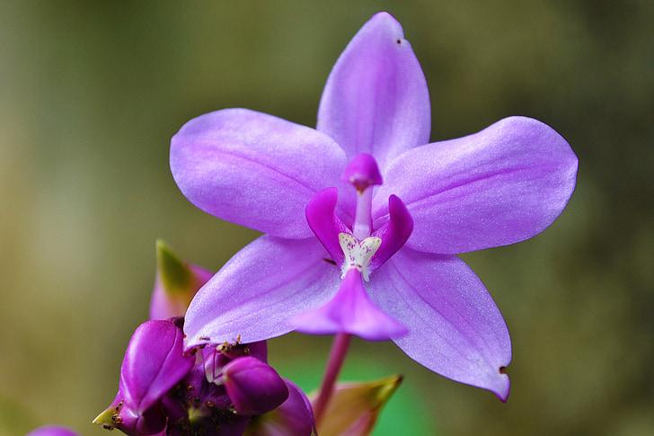 purple orchid flower selective focus photography