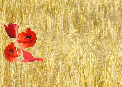 red flower by the field