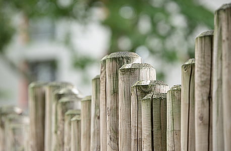 depth of field photography of bamboo stick fence