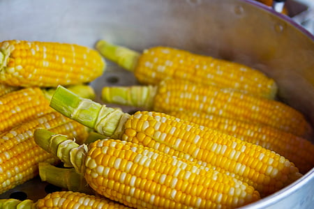 bunch of yellow corn inside grey container