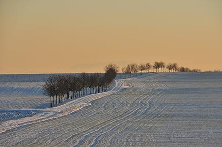 tree line on gray sand desert at golden hour
