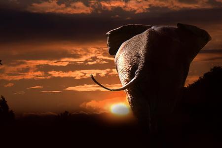 gray elephant during sunset
