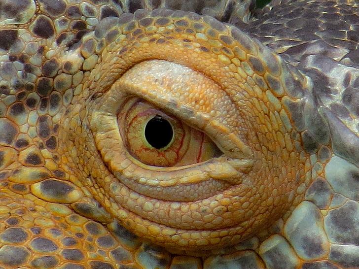 animal eye