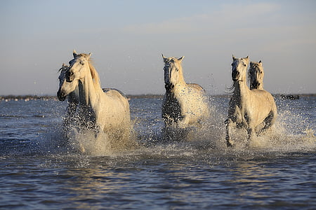 herd of horse running in water during daytime