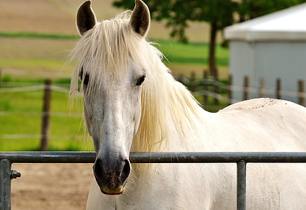 shallow focus photography white horse