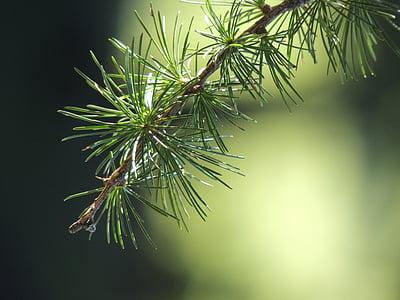 green string leaf plant