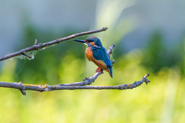 shallow focus photography of blue and orange bird standing on gray wood branch