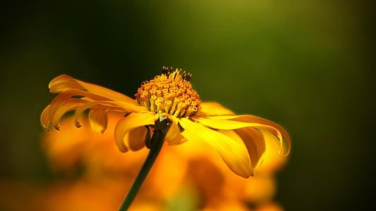 macro photography of yellow flower