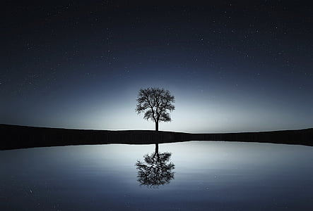 silhouette photo of tree reflecting on body of water