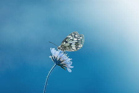 paperkite butterfly perched blue petaled flower
