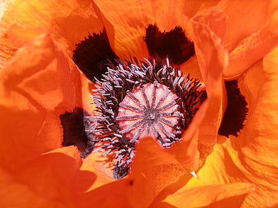 orange petaled flower closeup photo