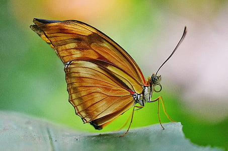 malachite butterfly perching on green leaf in close-up photography