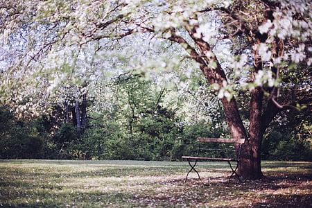 photo of white tree