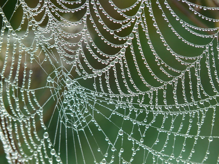 web with water drops photo