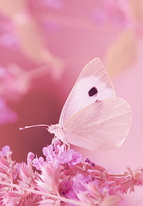 macro photography of white butterfly perched on purple petaled flower