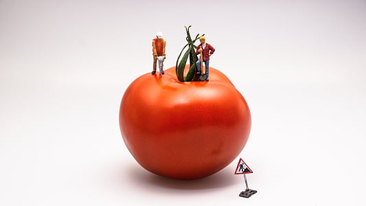 two man on the tomato